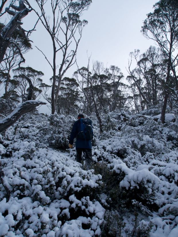 Graham ploughs through the snow and scrub (thanks!)