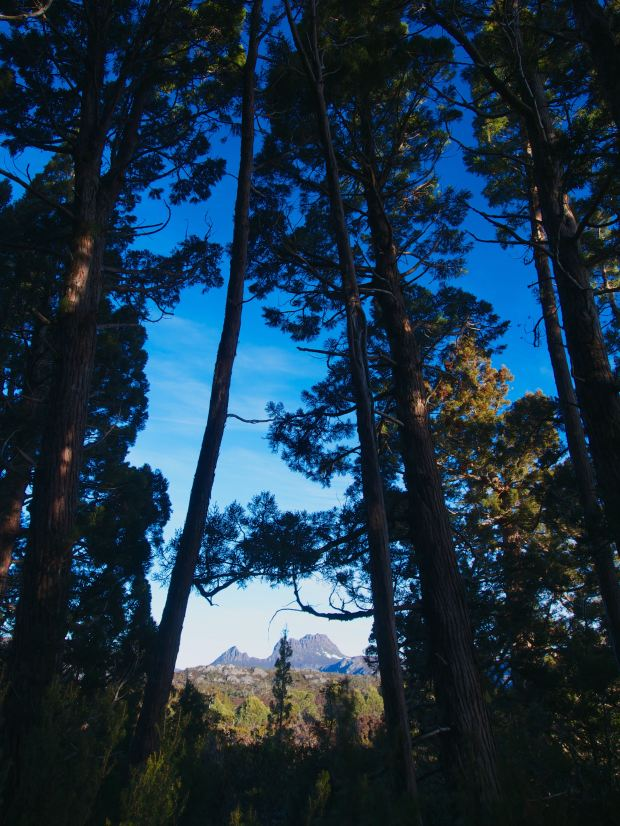 From in the pine forest..
