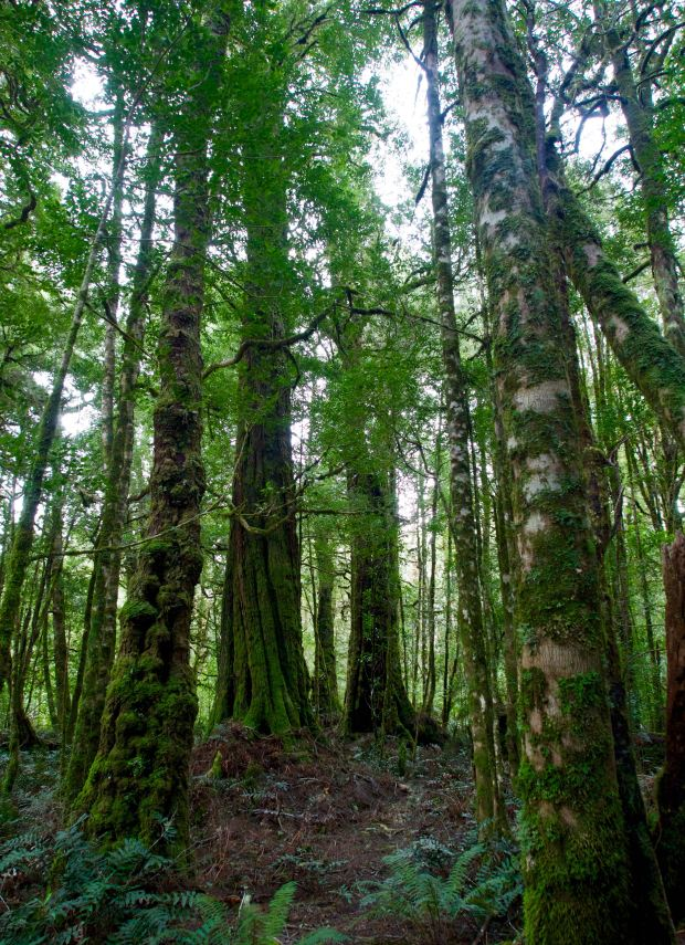 I liked the trees :)