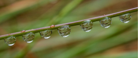 A world of button grass in a drop of water - this photo summed up the experience fairly well.