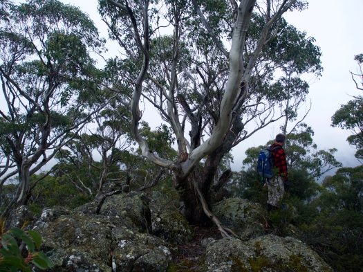 Stevenson's Lookout summit (left) and John (right)