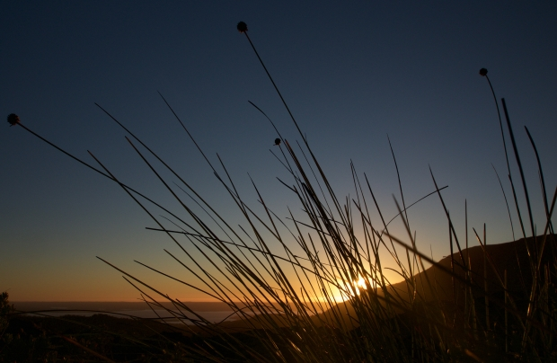 Sunset and buttongrass