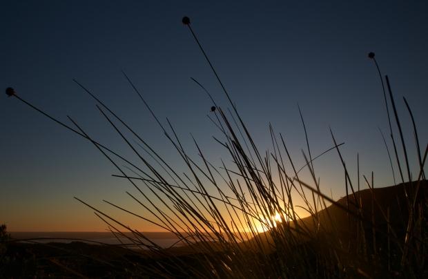 Sunset and buttongrass