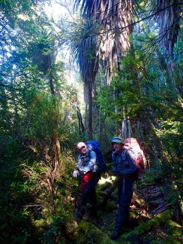 Beautiful pandani and myrtle forests