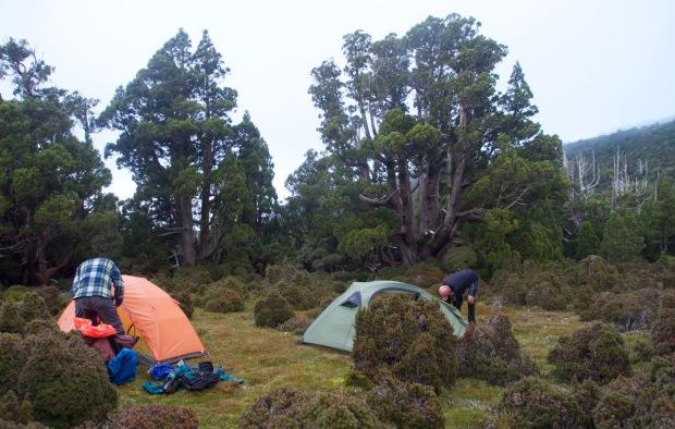 Pine camp - lovely spot
