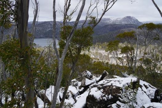 Rogoona from Nescient Peak summit (or close to)