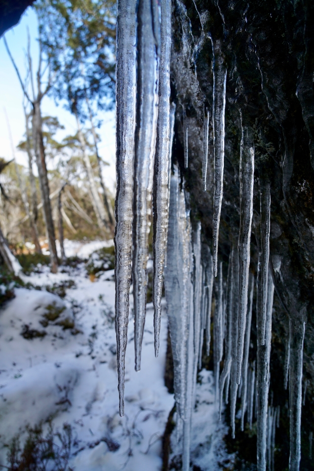 The sun warms the day up and the clouds gradually disperse, but the icicles remain in the shade