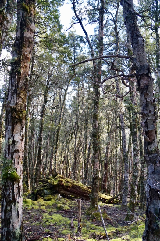 A small patch of myrtle forest was a welcome reprieve from the scrub bash
