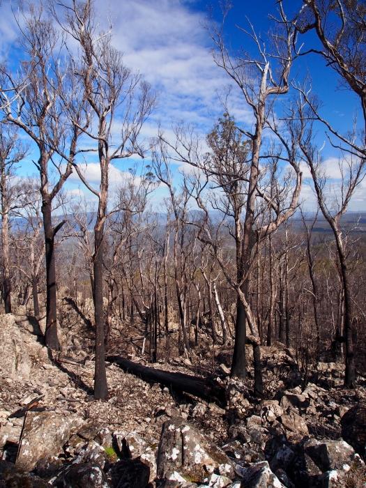 Byatts Razorback hit by the fires