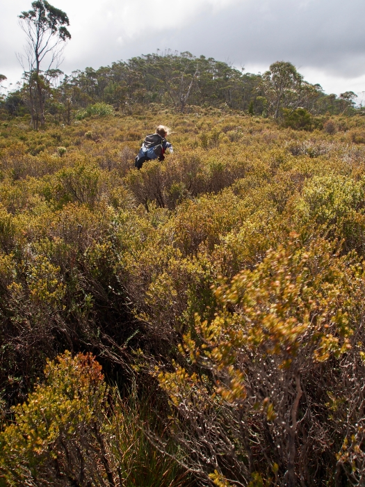 Jess makes her way along the ridge in a spot where the scrub is not so hard