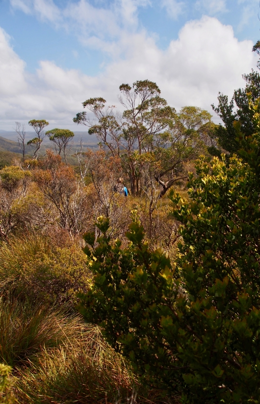 Heading back down, Celery Top pine in the foreground. This is the walk I think I've seen the most on in all my walking years!