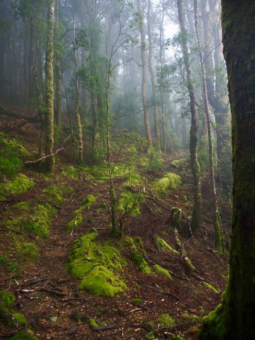 Heading up through lovely forest to Fraser Creek hut