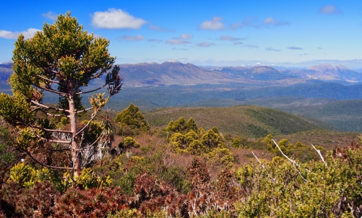 Out of the forest and onto the open top before the final climb, and we have sun and views!